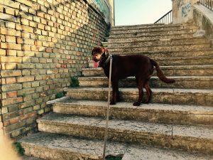 Ringo in Ancona Italy